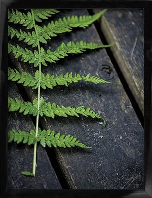Naturplakat af Bregne der måler 30x40 cm