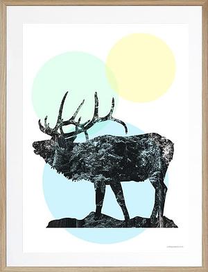 Elk 50x70