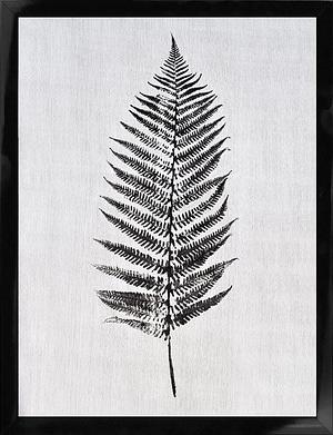 Sort/hvid naturplakat af blad 30x40 cm
